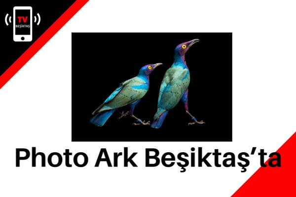 Photo Ark Beşiktaş'ta